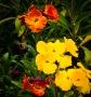 flores primavera 1